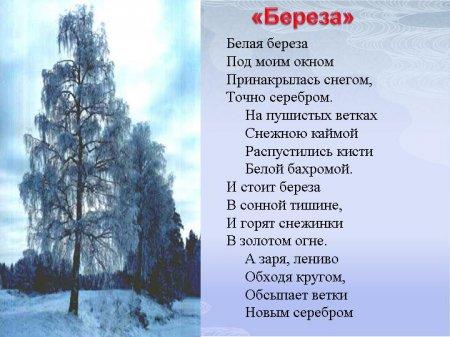 Стих Есенина - белая береза под моим окном